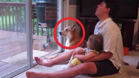 Il papà imita un ululato provocando l'immediata reazione del cane