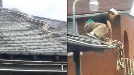Pitone gigante semina il panico: arriva fin sul tetto di una casa