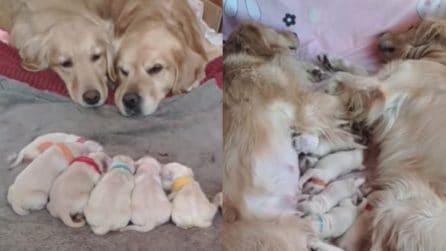 Sono appena diventati genitori: mamma e papà non lasciano un attimo i cuccioli