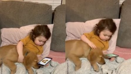 Il cucciolo si lascia andare tra le braccia della sua migliore amica: la scena tenerissima