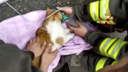 Gattini intossicati dal fumo dell'incendio: rianimati con le bombole di ossigeno