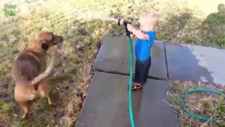 Il bambino gioca insieme al cane: ecco che succede quando gli butta l'acqua addosso