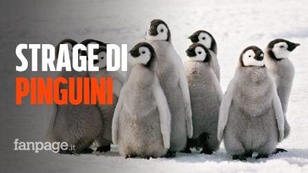 Migliaia di giovani pinguini imperatore sono morti, strage in Antartide