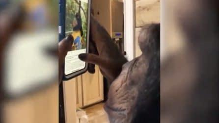 """Lo scimpanzé che usa Instagram: completamente """"estasiato"""" dai social"""