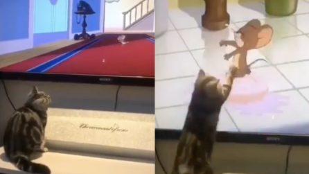 Il gattino sta guardando Tom e Jerry: esilarante ciò che accade improvvisamente