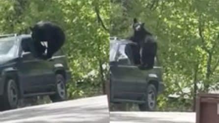 Tenta di entrare in auto, ma viene colto in flagrante: la scena esilarante