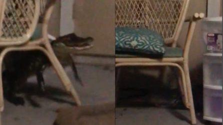 Il cane abbaia in piena notte e avvisa i padroni del pericolo in casa