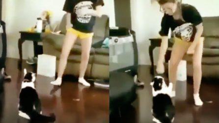 Infastidisce il gatto che alla fine reagisce male