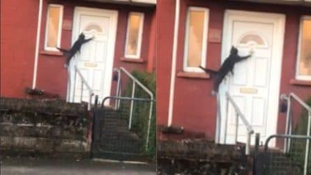 Il gatto vuole rientrare in casa: quello che fa è esilarante