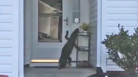 Rientra a casa ma trova qualcuno ad attenderla: le immagini terrificanti