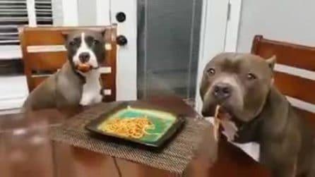 Li colgono sul fatto: la reazione dei cuccioli è bellissima
