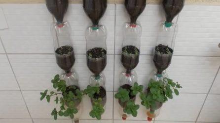 Giardino verticale con bottiglie di plastica: come farlo in casa tua