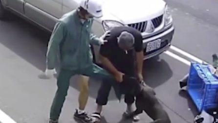 Il postino sulla moto viene attaccato ferocemente da un pitbull
