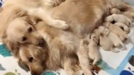 Si prende cura della madre mentre allatta: tutto l'amore che una famiglia può darti