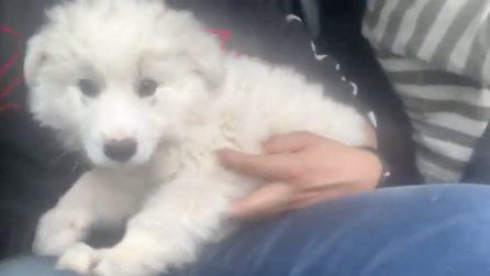 Trova un cucciolo abbandonato in superstrada ma non può adottarlo: il risvolto impensabile