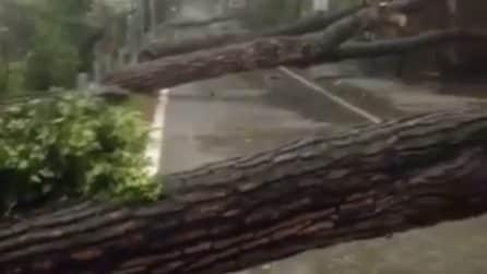 Vento fortissimo spezza gli alberi: i tronchi cadono in strada