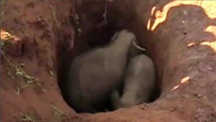Gli abitanti del villaggio li trovano in una fossa: così salvano due elefanti