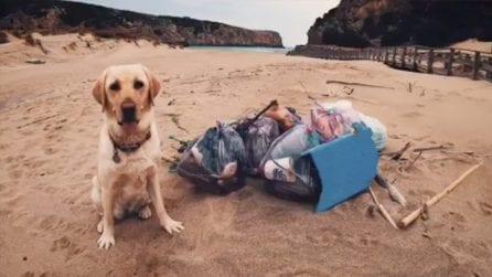 Il Labrador che raccoglie la plastica dalle spiagge della Sardegna, ripulisce Cala Domestica