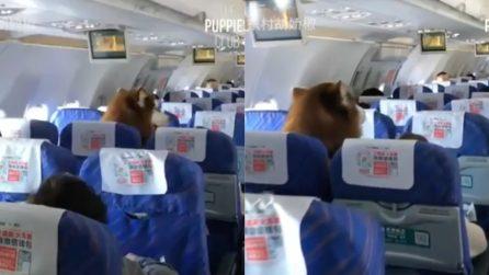 Riprende l'insolito passeggero in aereo: la scena è tutta da ridere