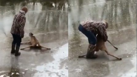 Proprio come Bambi: il cervo non riesce a camminare sul ghiaccio