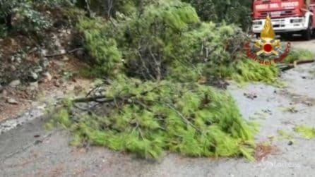 Emergenza maltempo, muoiono due persone travolte dagli alberi
