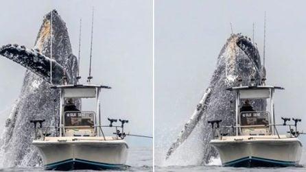 Spunta dall'acqua improvvisamente ed è enorme: il pescatore sulla barca resta di sasso