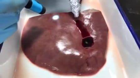 Colla bio chiude ferite ed evita sanguinamento: come funziona