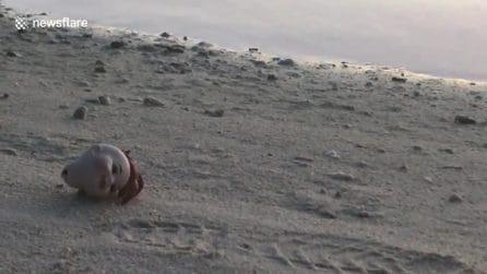 La testa di una bambola come conchiglia: tutto questo per colpa dell'inquinamento