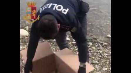 Milano, mamma papera e i suoi anatroccoli si perdono in città: la polizia li riporta al lago