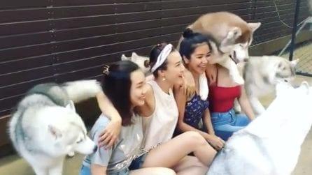 """Le modelle si mettono in posa ma i cani sono un po' """"invidiosi"""": la scena comica"""