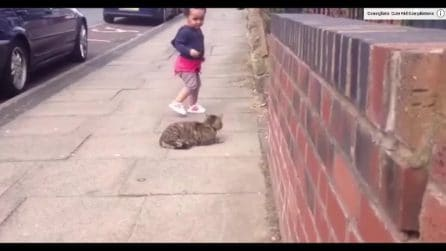 Vede per la prima volta un gatto in strada: la reazione della piccola è tutta da vedere