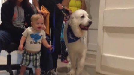 Il dolce bimbo è affetto dalla sindrome di Down: impara a camminare con il suo nuovo amico