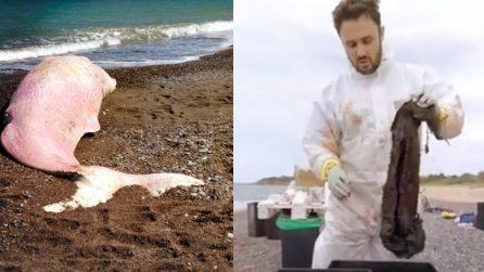 """Capodoglio spiaggiato a Cefalù, la denuncia di Greenpeace: """"Nel suo stomaco chili di plastica"""""""