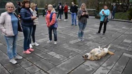 Un cane se ne sta così in piazza, la scena diverte i turisti