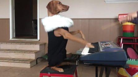 La padrona guida l'orchestra, il cane è molto attento a non sbagliare
