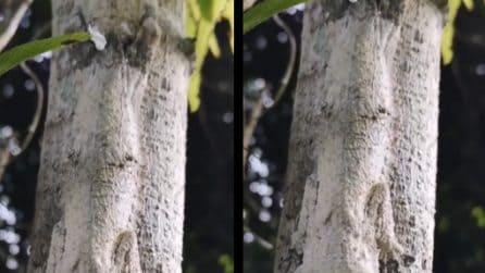 In questo tronco d'albero c'è un animale mimetizzato: riesce a vederlo?