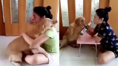 Finge di farsi del male e piangere: la reazione del cane è tenerissima