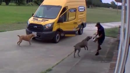 Due pit bull aggrediscono il postino: riesce a salvarsi nell'unico modo possibile