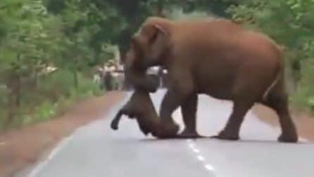 Mamma elefante non vuole lasciare il suo cucciolo morto: le immagini strazianti