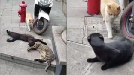 """Il gatto """"infedele"""" viene scoperto: la reazione della gatta è esilarante"""