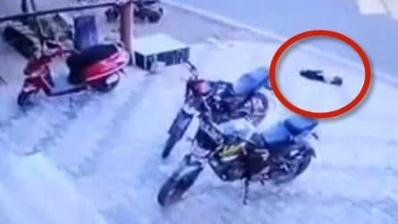 Cane riversato sull'asfalto rischia di rimanere ucciso: le immagini sono spaventose