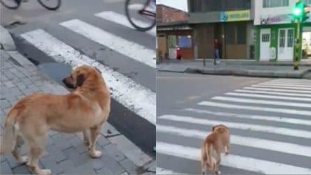Dà a tutti una lezione di civiltà: il comportamento esemplare del cane