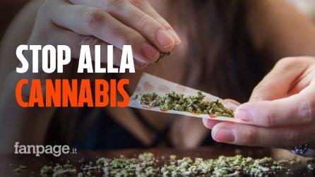 Cosa dice la Cassazione sulla vendita della cannabis light