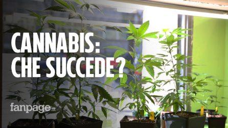 Cannabis light, dopo la sentenza della Cassazione a Milano molti negozi preferiscono chiudere