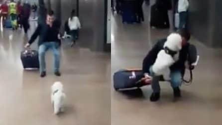 Non lo vede da circa un mese: al suo rientro il cucciolo non trattiene la gioia
