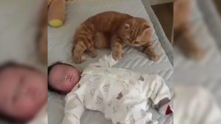 Gli tiene la mano per farlo addormentare: una meravigliosa amicizia