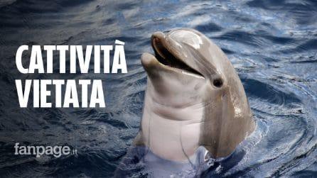 Vietata la prigionia di delfini, balene e focene: storica legge approvata in Canada