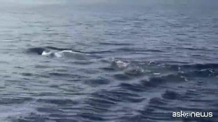 Incontro ravvicinato con un capodoglio nelle acque di Capri