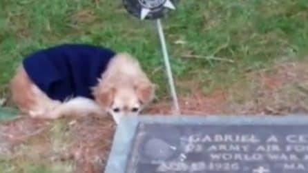 Non la lascia andar via: la cagnolina veglia sulla tomba della padrona morta