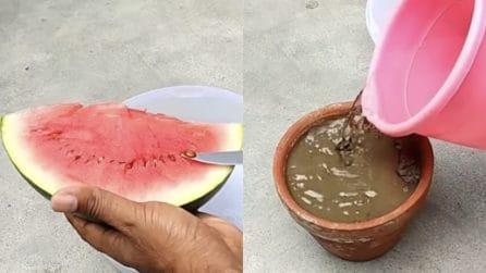 Come coltivare l'anguria: i semplici passaggi per farlo in casa